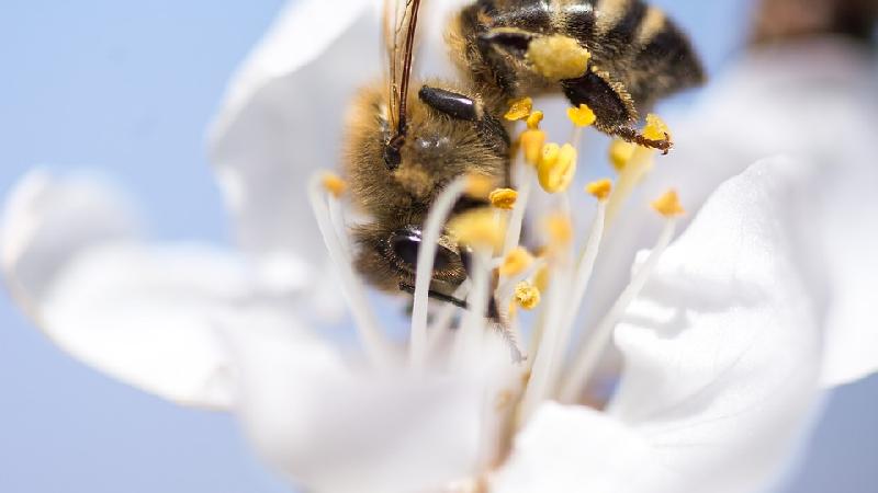 Alerte rouge aux pollens (carte + conseils) - - AGATE FRANCE